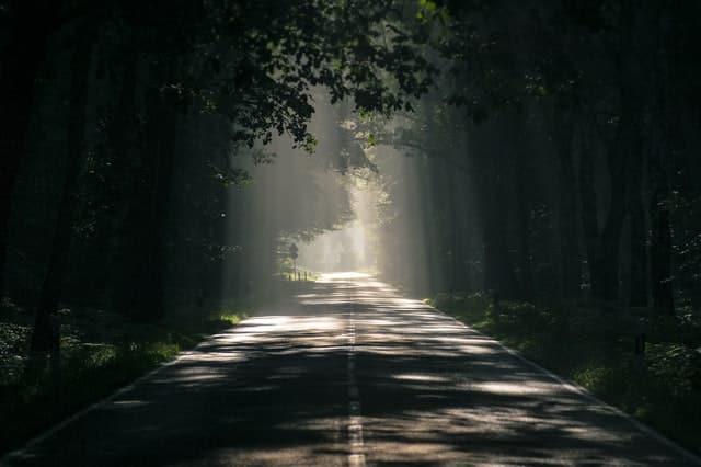 Estrada iluminada com árvores dos dois lados