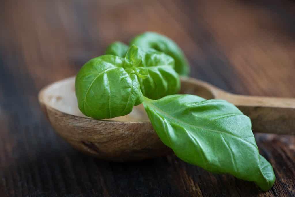 Imagem da folha de alfavaca sobre uma colher de madeira.