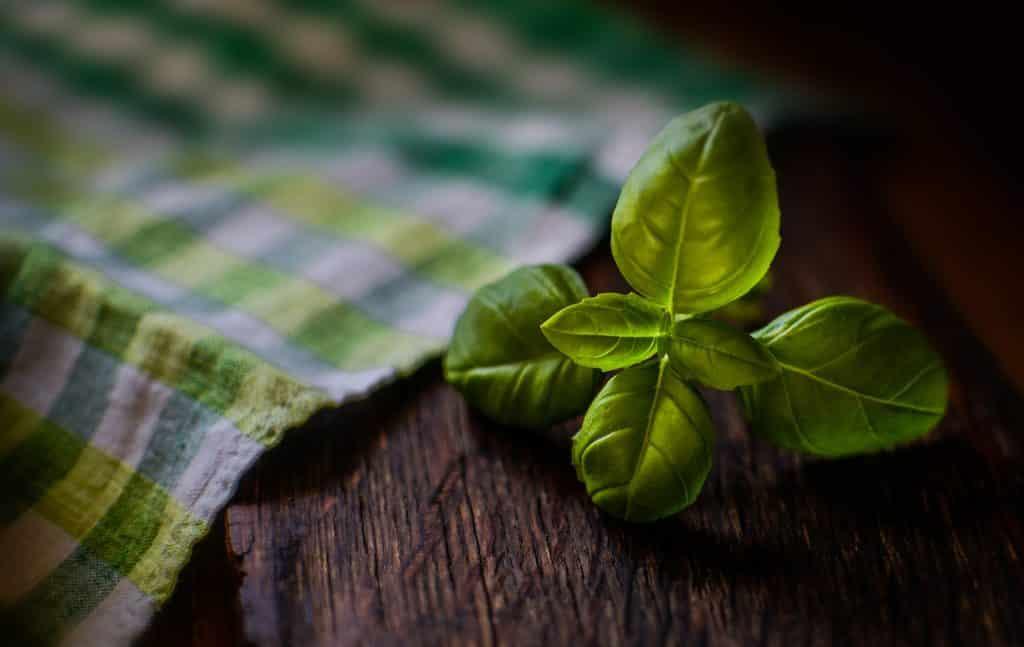 Imagem da folha de alfavaca sobre uma mesa de madeira. Ao lado uma toalha xadrez nas cores amarela, verde e branca.
