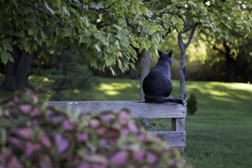 Imagem de um lindo jardim e um gato preto sentado sobre uma cerca de madeira.
