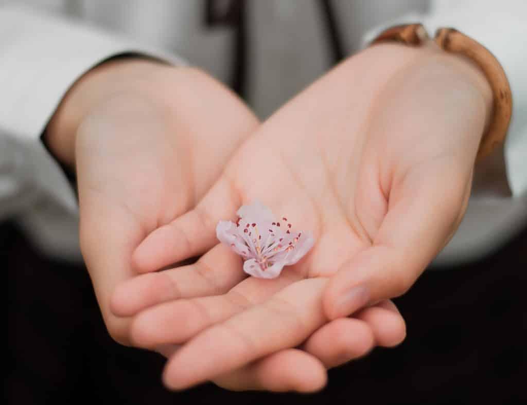 Duas mãos segurando uma pequena flor.