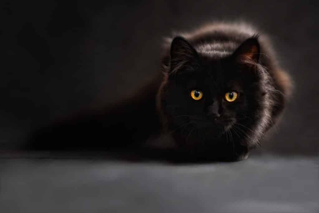 Imagem da silhueta de um gato preto com os olhos amarelos e bem abertos.
