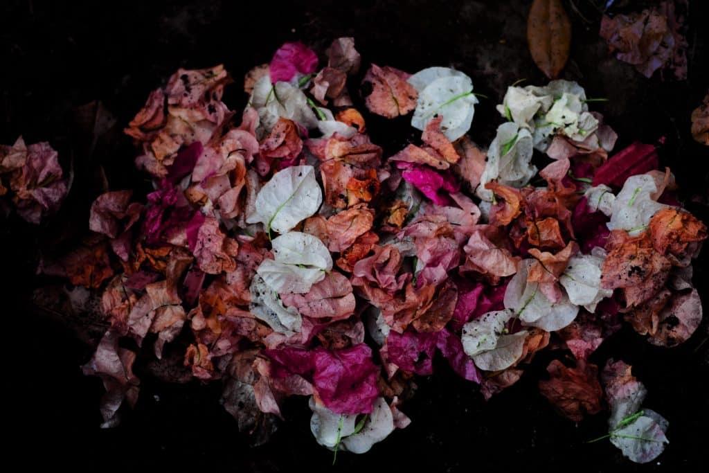 Flores sem vida