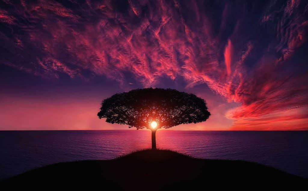 Sol se pondo no meio de uma árvore no mar