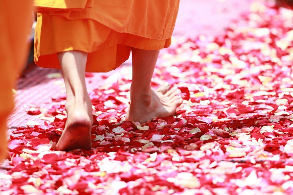 Imagem de um monge budista caminhando sobre pétalas de rosas e flores nas cores rosa e vermelho.
