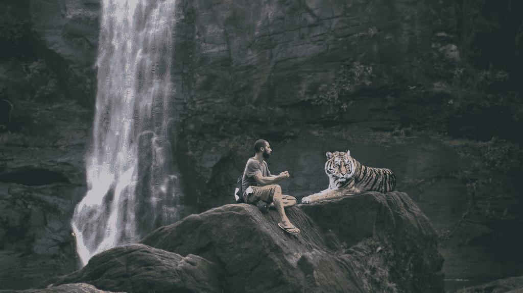 Imagem de uma linda cachoeira. Ao lado um homem sentado em uma pedra ao lado de um lindo tigre.