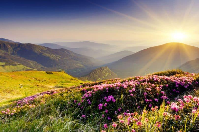 Paisagem montanhosa vista durante o dia, com flores desabrochando e a luz do sol percorrendo o cenário.