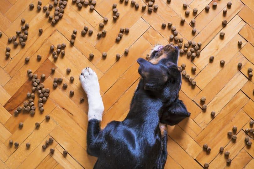 Imagem do piso de taco e de ração espalhada sobre ele. Um cão está se deliciando com a comidinha.