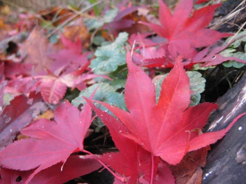 Imagem de folhas de inverno na cor rosa, representando a campanha Outubro Rosa.