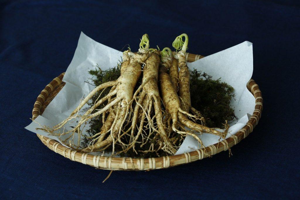 Prato com raízes de ginseng sobre uma mesa.
