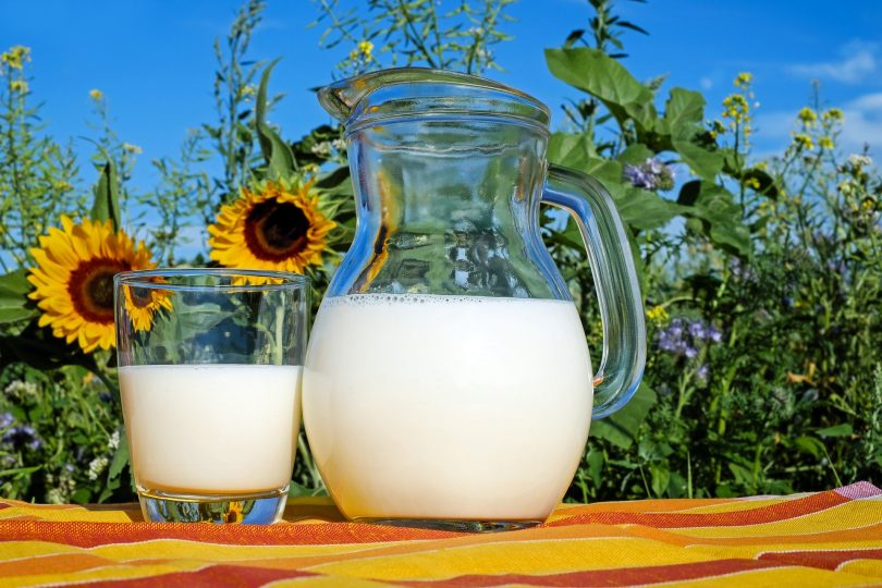 Imagem de uma jarra e um copo de vidro com leite puro. Ao fundo uma plantação e uma flor de girassol.