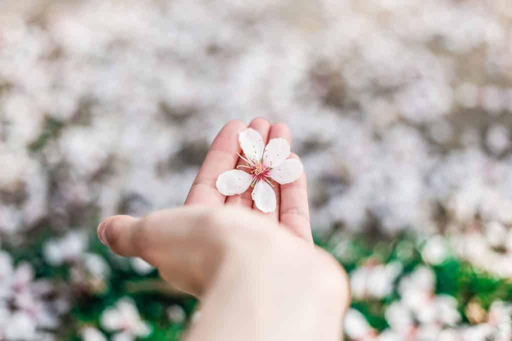 Pessoa segurando uma flor