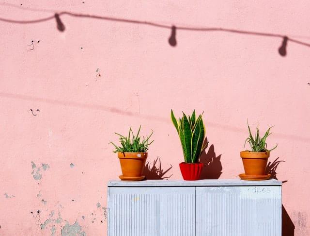 Vasos de plantas ao sol com parede rosa ao fundo