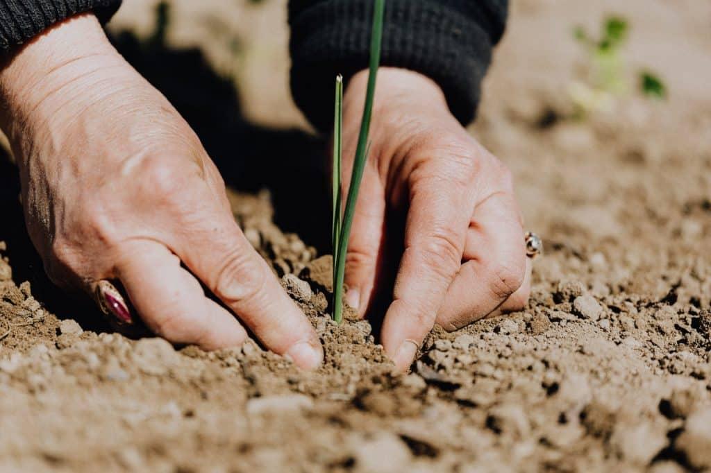 Imagem de duas mãos arrumando a terra em volta de uma planta que está nascendo - simboliza a fertilidade