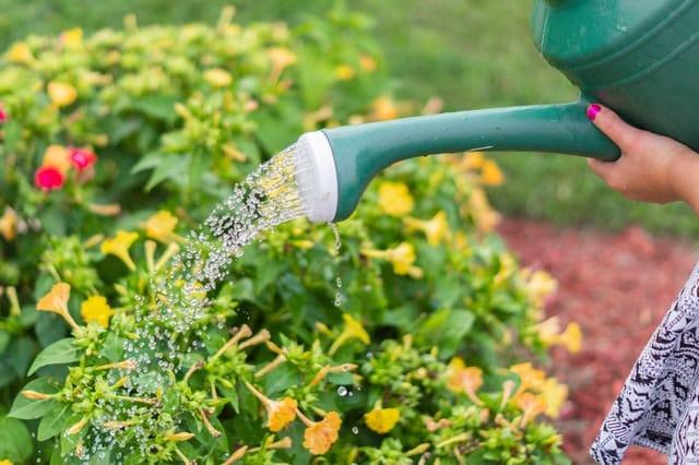 Mão com regador molhando plantas