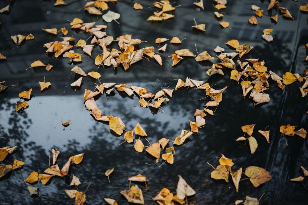 Coração em formato de folhas em um carro