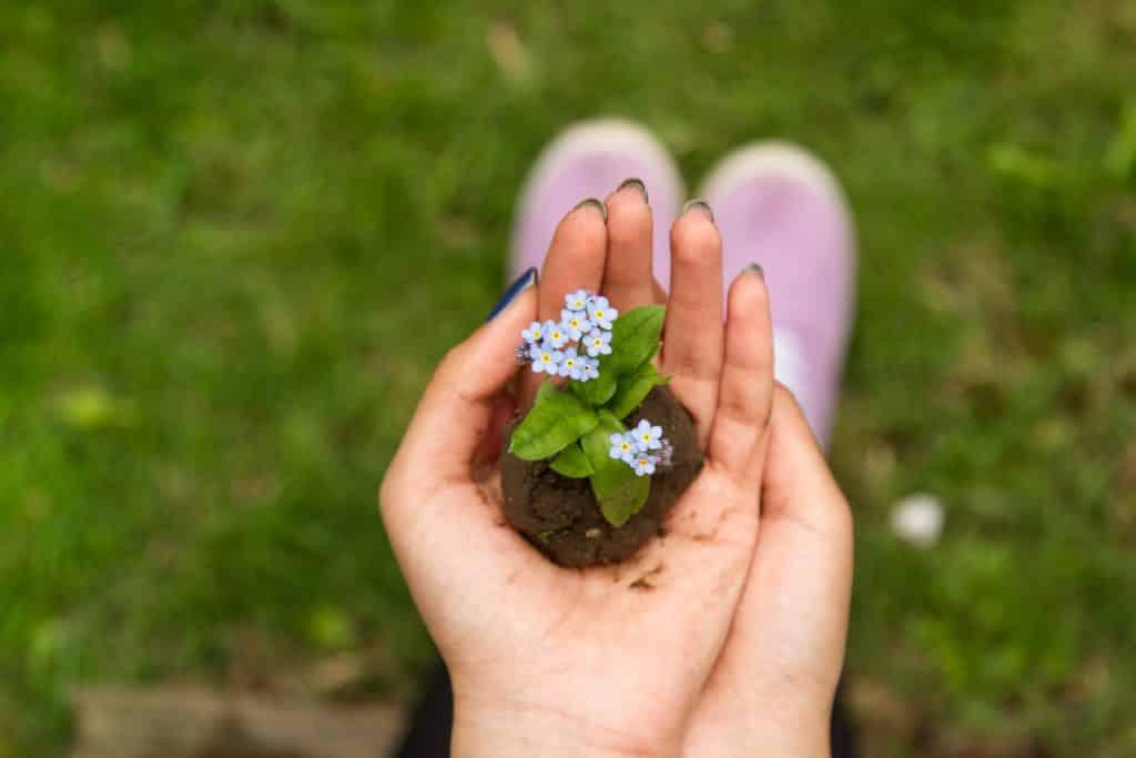 Pessoa segurando flor com terra