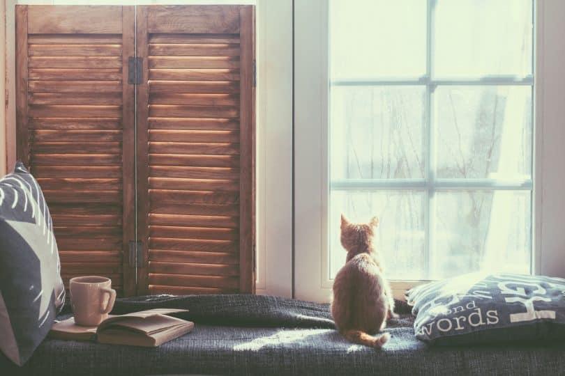 Quarto com sofá cinza encostado na parede e um gato sentado.