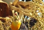 Pássaro e galhos de árvore.