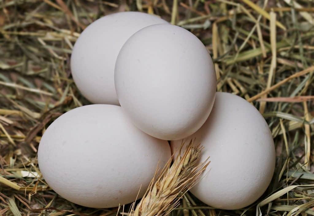 Imagem de quatro ovos brnacos inteiros dispostos sobre uma palha.