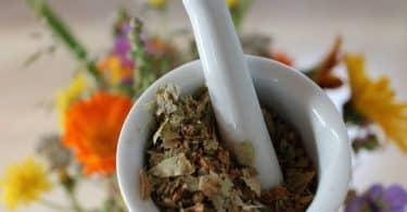 Imagem de folhas secas dentro de um macerador para ser usado uma um remédio caseiro para a candidíase.