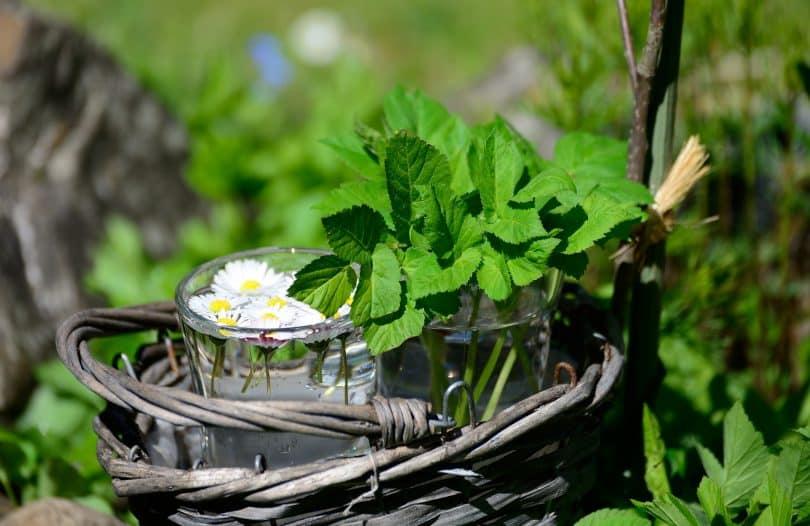 Imagem de um cesto de vime e dentro dele um copo com uma planta que será utilizada para remédio caseiro para a ansiedade e medo.