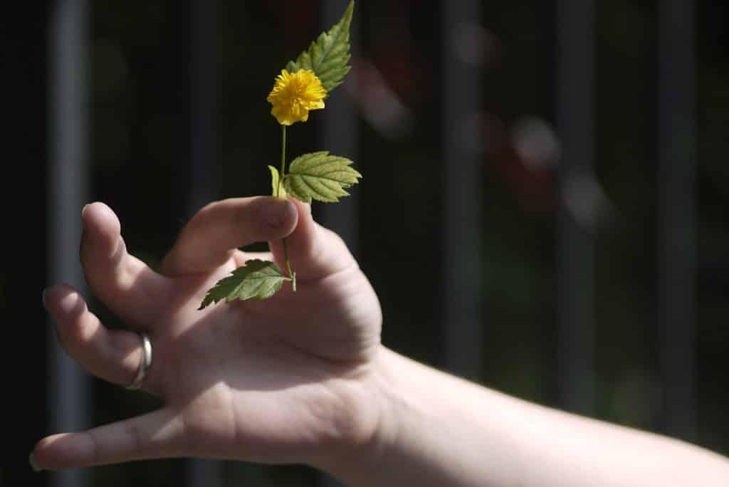 Imagem de uma mão segurando entre os dedos uma flor amarela, em sinal de doação de afeto e amor.