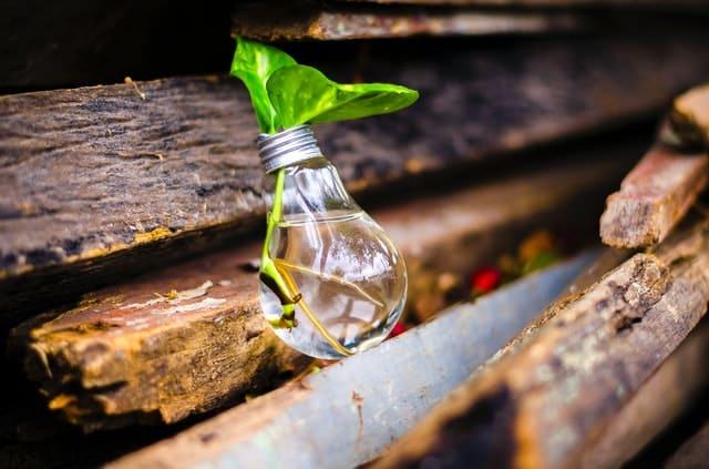Lâmpada com água e planta dentro apoiados em madeira antiga