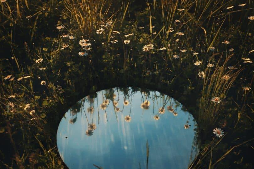 Espelho em um gramado com flores