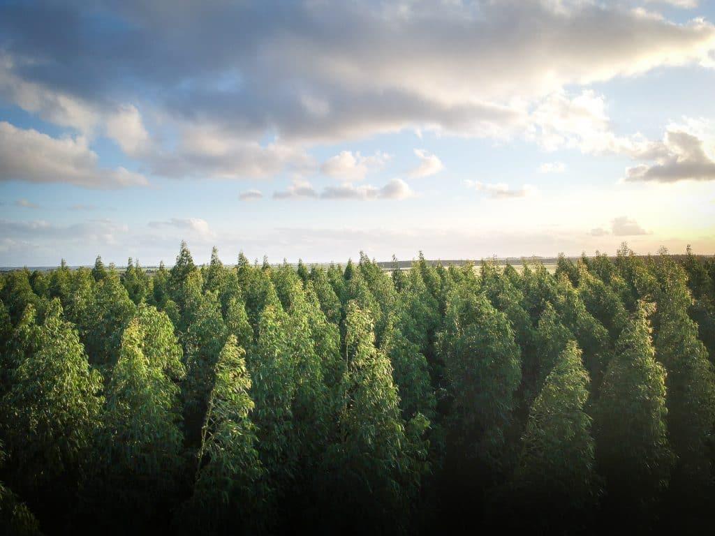 Floresta com diversas árvores e um céu com nuvens