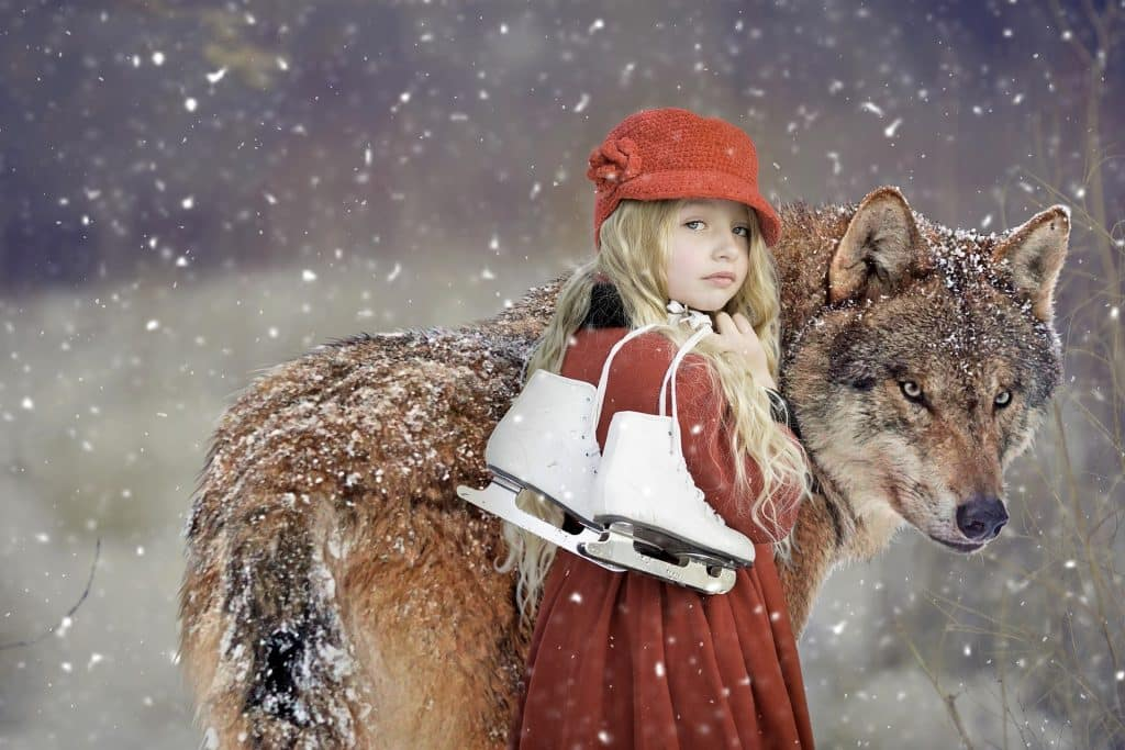Imagem de um lindo lobo marrom e uma jovem mulher ao lado dele. Está nevando e a garota está segurando um patins para uso na neve.