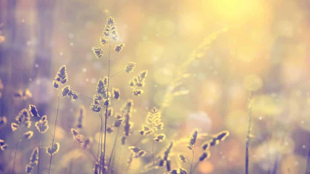 Folhas iluminadas pelo sol.