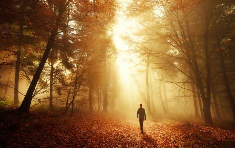 Homem andando em floresta seca com luz refletindo