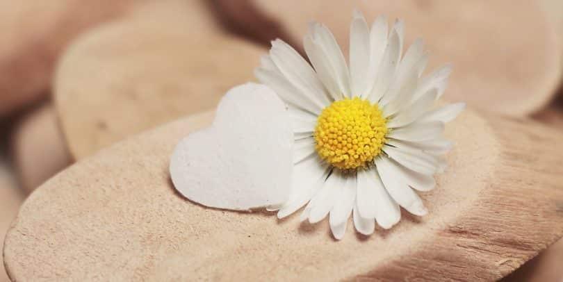 Imagem de uma linda margarida e ao lado dela um coração feito de papel. Eles estão dispostos sobre um pedaço de madeira.
