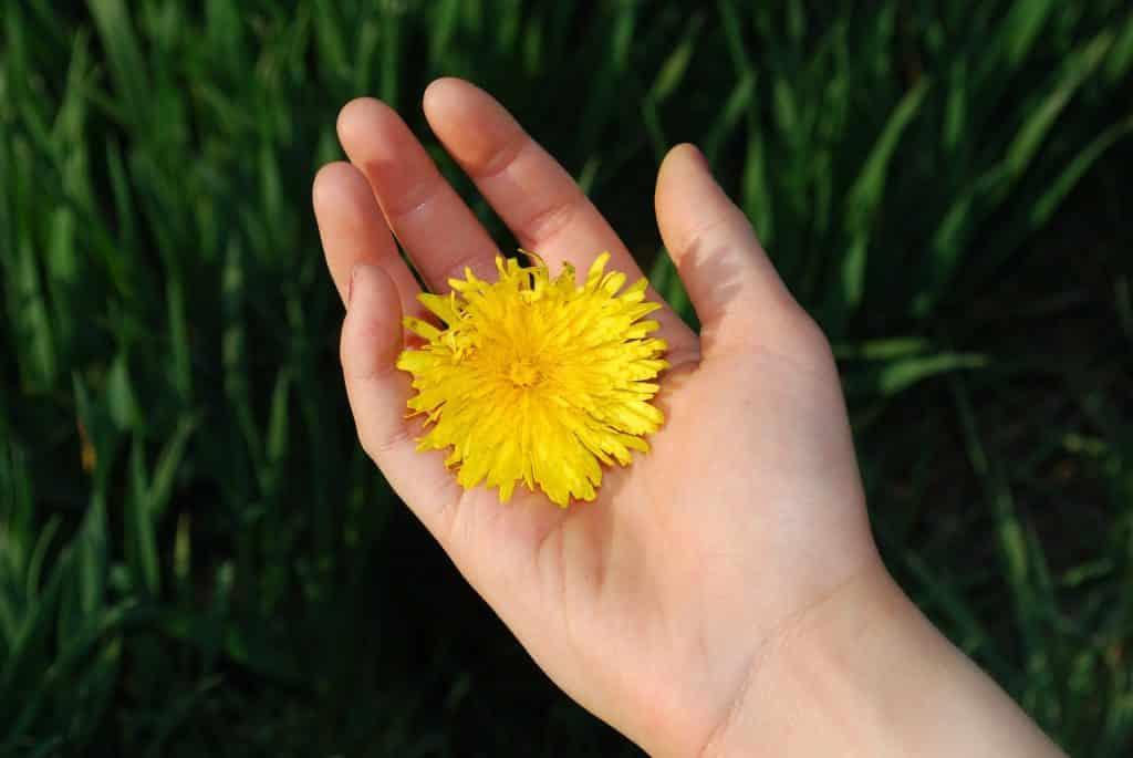 Imagem de uma mão feminina e sobre ela uma flor amarela, representando a gentileza com a natureza e com as flores.
