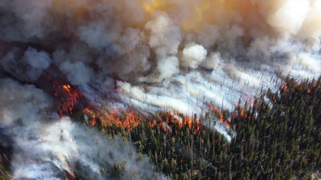 Imagem das florestas do Pantanal em processo de queimada.