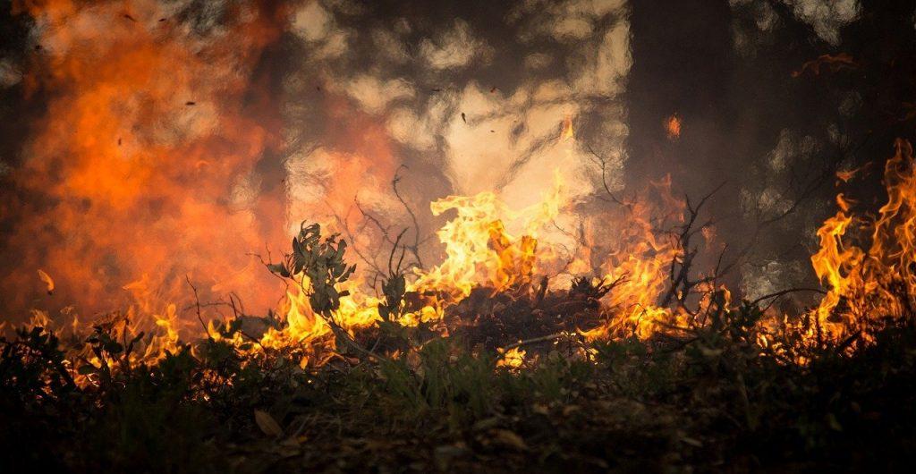 Imagem de uma queimada no Pantanal.