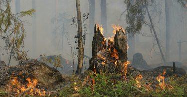 Imagem de uma parte do pantanal com um pouco de queimada.
