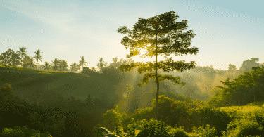 Imagem de uma paisagem com árvores, luz solar e um céu azul