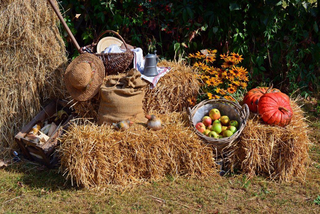 Imagem decorativa de uma colheita de alimentos demonstrando a forma de agradecimento e comemoração ao dia de ação de graças.