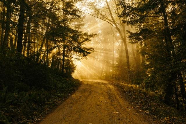 Estrada de terra entre árvores iluminada por raios de sol
