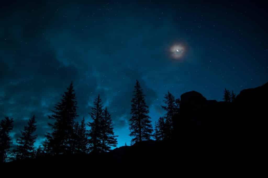 Silhueta de pinheiros com céu azul ao fundo.