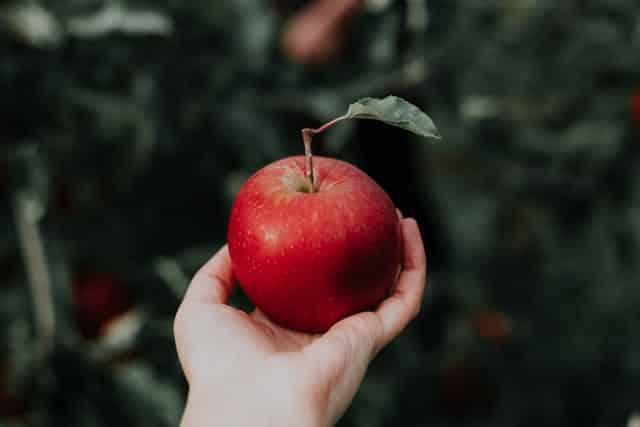 Mão segurando maçã vista de perto