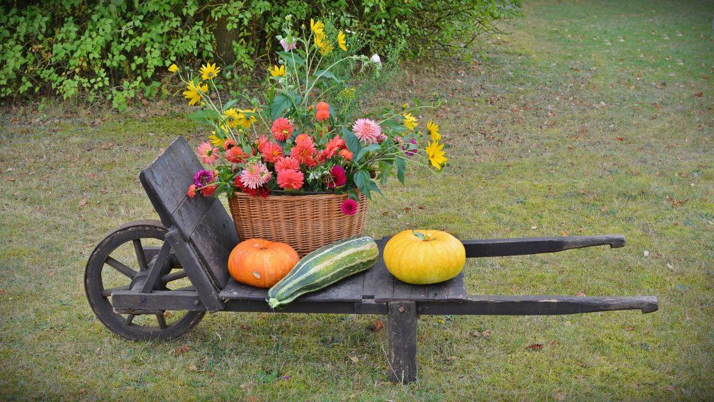 Imagem de uma decoração para celebrar o dia de ação de graças. Trata-se de uma carroça de madeira escura e sobre ela um cesto e palha com flores e três tipos de abóbora.