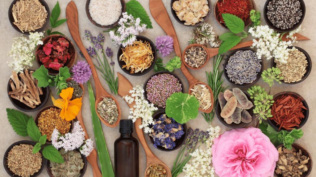Diversas plantas, flores e ervas sobre uma mesa.