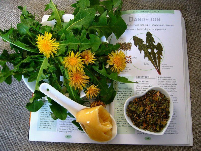 Imagem de um livro de ervas para elaborar receitas naturais para dor de garganta. Sobre ele, vários tipos de ervas que servirão de ingredientes para várias receitas.