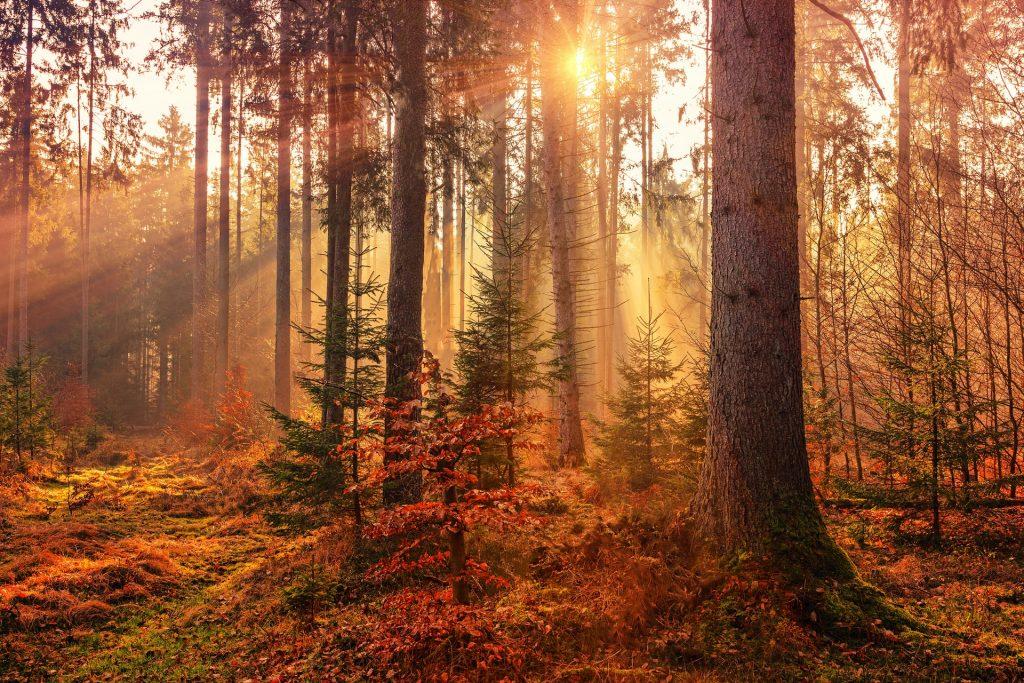 Floresta de árvores secas e laranjas.