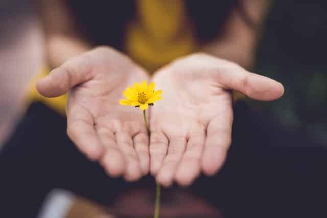 Par de mãos brancas femininas segurando uma flor amarela.