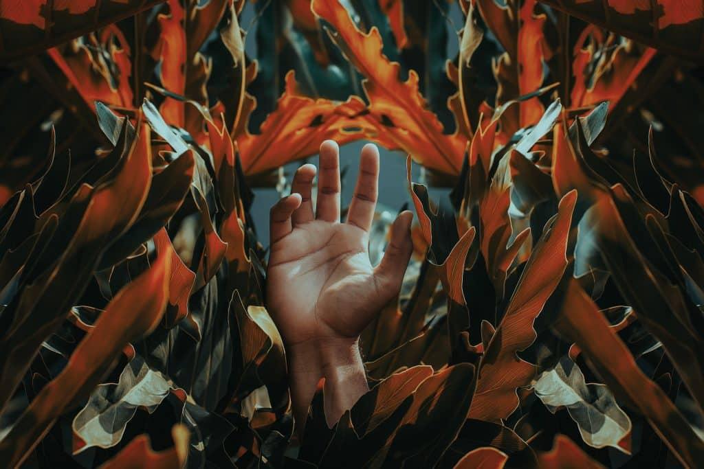 Mão abertas entre folhagens