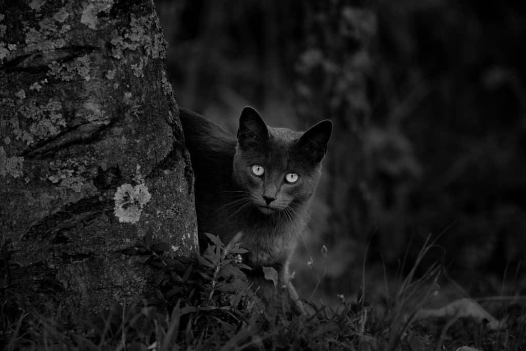 Gato preto ao lado de uma árvore